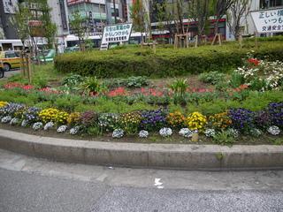 2012年南口花壇全体.JPG