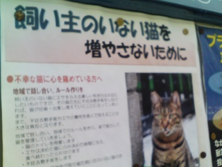 猫ポスター.jpg